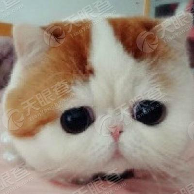 经营状况 微信公众号信息1 大爱猫咪控 功能介绍:每日分享可爱小猫咪